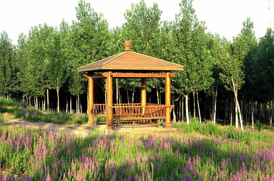 北辰郊野公园绿化养护